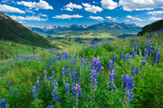 Picture of wildflowers