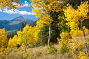 Colorado Fall Picture