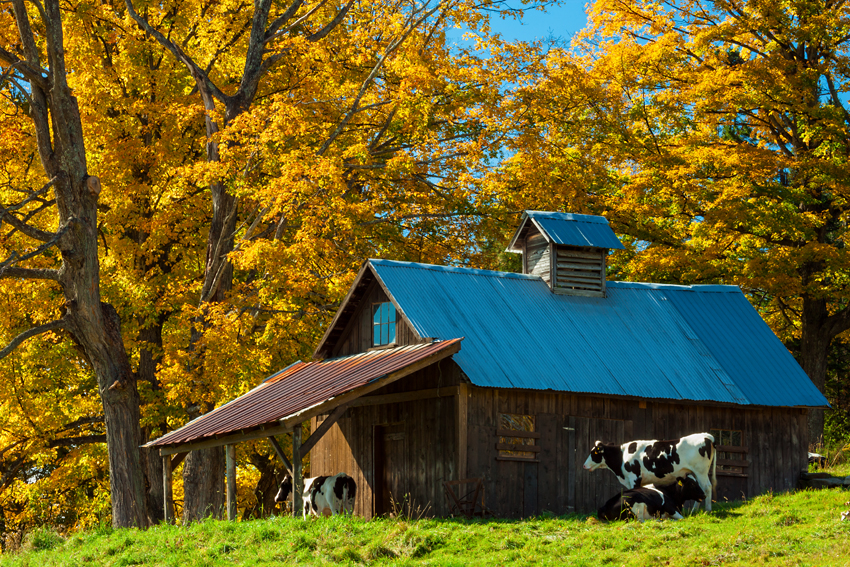 Photograph of a Vermont barn.