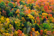Photograph of Vermont fall colors.