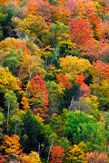 Autumn photograph of a Vermont fall foilage.