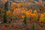Photograph Colorado Autumn
