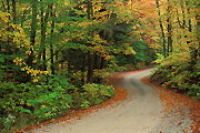 Autumn photograph of a Vermont country road.