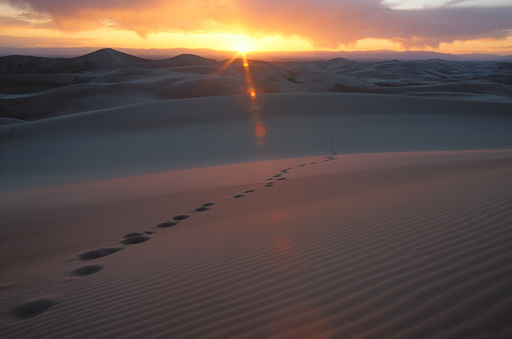Footprints Photo - Sand Dunes National Park