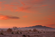 Photograph of Sunrise at Bosque del Apache National Wildlife Refuge, New Mexico.