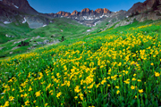Pictures of Colorado Wildflowers