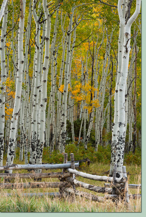 CO Fall Photography Workshop